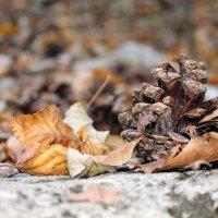 золотая осень :: elena manas