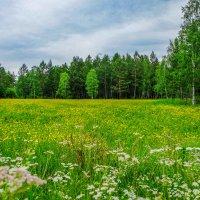 На лесной полянке. :: Rafael