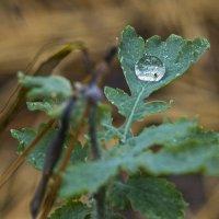 после дождя :: Геннадий Свистов