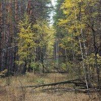 в лесу 2 :: Геннадий Свистов
