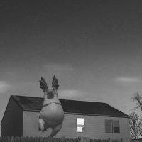 Ночной полёт :: Billie Fox