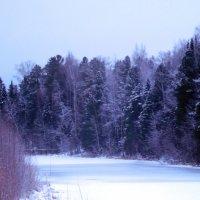 После ночного снегопада :: Наталья Пендюк Пендюк