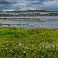 Из серии «Мурманск. Кольский залив во время отлива». :: kolin marsh