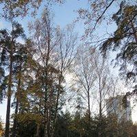 Городской парк :: Вера Щукина