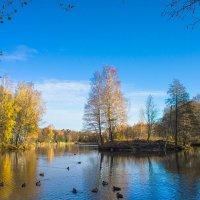 Осень в Дубках :: Виталий