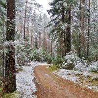 Предзимье в лесу :: Исаков Александр