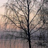 Первый лед :: Светлана Игнатьева