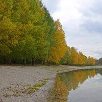 Осень. :: Galina Dzubina