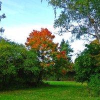 Вышла Осень погулять, Летний лес разрисовать.... :: Galina Dzubina
