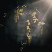 Лучики.... :: Oxana Schneider