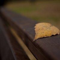 Осень :: Эдуард Монахов
