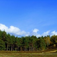 Осенний пейзаж :: Nina Yudicheva