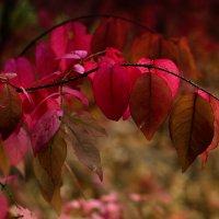 Осень :: Алексей Головин