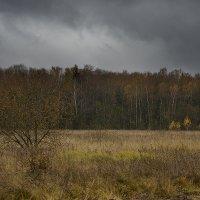 хмурая осень :: Виталий Устинов
