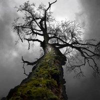 Dark Tree :: Виталий Устинов