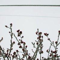 Снег :: Катя Гет