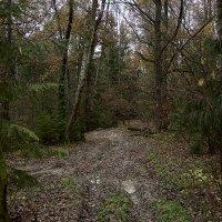 Forest path :: Виталий Устинов