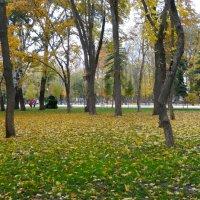Осень в парке...8 :: Тамара (st.tamara)