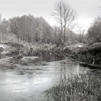 Всё та же река Серёжа. :: Николай Масляев