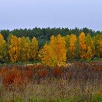 золотава осінь... :: Наталия Рой