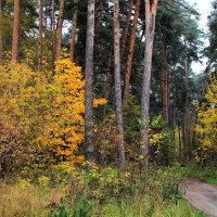 Устали листья лето вспоминать... :: Лесо-Вед (Баранов)