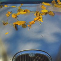 Ягуары в осень такие.... :: M Marikfoto