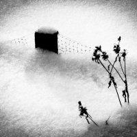 На зимовке :: Eugene *