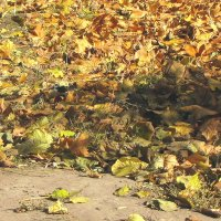 На ковре из желтых листьев... :: Александр Скамо
