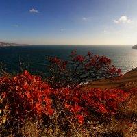 Осень в Двуякорной бухте. :: юрий ярмонтович