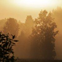 Туман и утро :: Александр
