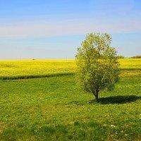 В одиночестве. :: oleg