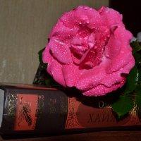Розы блистанье. :: zoja