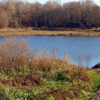 Тропинка к реке. :: Чария Зоя
