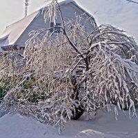 ледяное дерево) :: megaden774