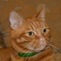 кот по имени Рыжик :: Даниил Сазин