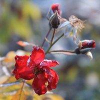 Осенние цветы :: Эдуард Цветков