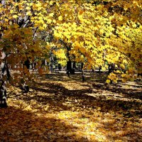 Осенние краски :: Татьяна Пальчикова