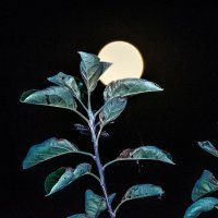 Жизнь под луной 2 :: Сергей Щербаков