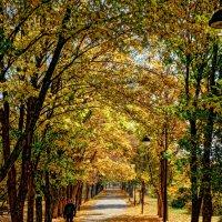 Осень в Краснодаре 3. :: Андрей Печерский