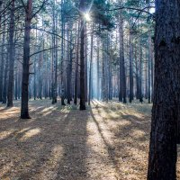 В лесу :: Александр Семенов
