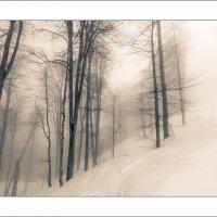 В тумане... :: алексей афанасьев