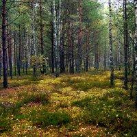 Осенний лес :: Игорь Сикорский
