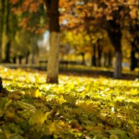 Осень :: Екатерина Исаенко