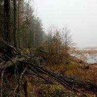 Туман 2 :: Андрей Соловьёв