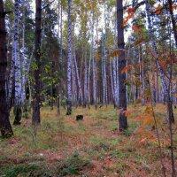Нарядная осень . :: Мила Бовкун
