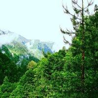 Абхазия :: Анастасия Дмитриева