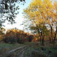 Золотые верхушки деревьев вдоль лесной дороги :: Александр
