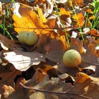 Чернильные яблочки :: Николай Котко