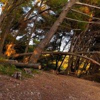 Падающий лес :: Светлана Игнатьева