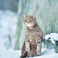 Первый снег :: Наталья Могильникова